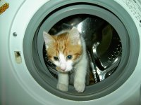 kot w pralce