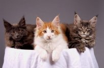 koty, kociaki