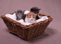 sprawdź ofertę na jedzenie dla psów i kotów Canagan